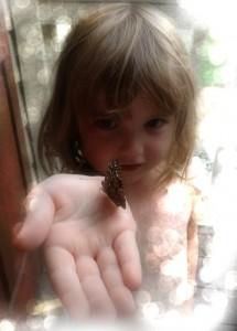 Butterfly2013