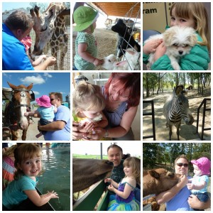 Ohio Animal Encounters