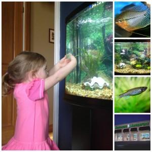 Our Aquarium Adventures